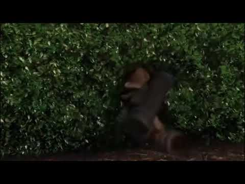 Over the Hedge - Final Battle Clip (HD)
