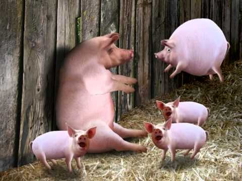 A Wonderfully Surreal Video That Features a Mother Pig Blowing Up Her Babies as