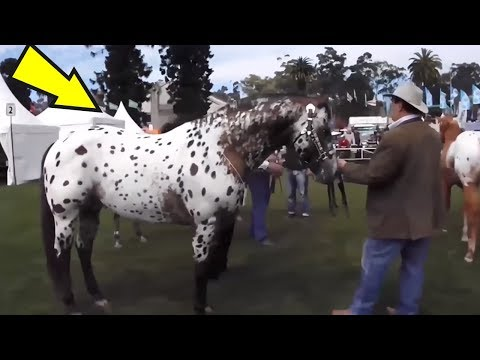 Video 5 Horses You Won't Believe Actually Exist! #2 download in MP3, 3GP, MP4, WEBM, AVI, FLV January 2017