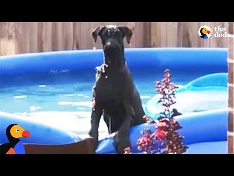 il-cane-beccato-mentre-nuota-in-piscina