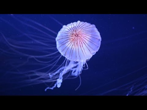 Jammin with Jellies at Point Defiance Zoo