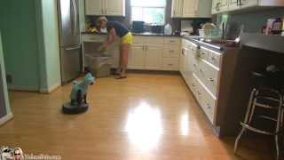 Cat Wearing A Shark Costume Cleans The Kitchen On A Roomba. Shark Week. #SharkCat cleaning Kitchen! - YouTube