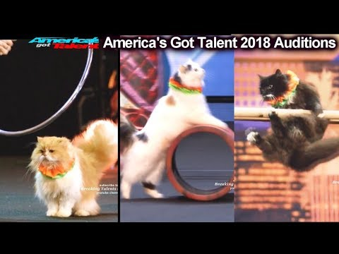 AMAZING CATS ACT Marina Savitsky Cats America's Got Talent 2018 Auditions S13E01