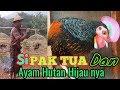 Download Lagu Bapak tua si penghobi AHH Ayam Hutan Hijau Mp3 Free