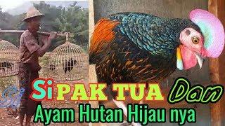 Video Bapak tua si penghobi AHH Ayam Hutan Hijau MP3, 3GP, MP4, WEBM, AVI, FLV April 2019