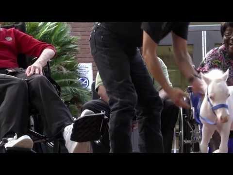 Apró paták a kórházi folyosón - terápiás minilovak munka közben