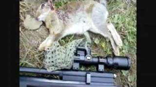 Pigeon Shoot Is Saved After Bagging A Rabbit..
