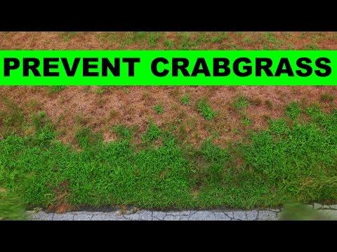 When to put down crabgrass preventer
