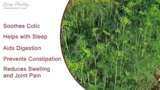 Living Healthy Moment-Dill
