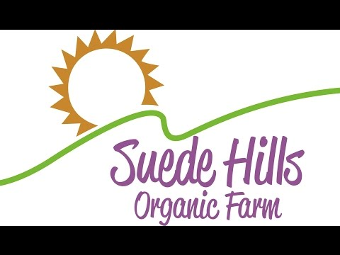 Harvesting Winter Kale at Suede Hills Organic Farm
