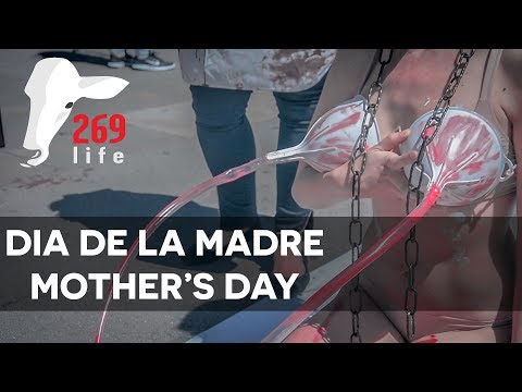 269 Life Catalunya   Performance Against The Dairy Industry 07 May 2017