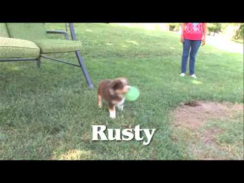 Rusty plays with a ball.