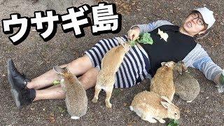Video うさぎ島でウサギに埋もれてみた!廃墟にもウサギが!? MP3, 3GP, MP4, WEBM, AVI, FLV Juli 2018