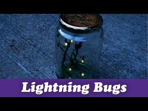 pittsburgh - Poke a few holes in a jar, it's time to catch lightning bugs! Like Pittsburgh Dad on Facebook: http://www.facebook.com/pittsburghdad Follow Pittsburgh Dad on...