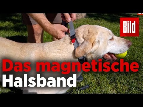 Magnetischer Verbund: Braucht DAS jeder Hundebesitzer ...