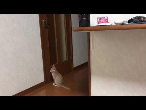 不慮の事故に驚いたねこ  A surprised kitten