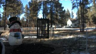 Time Lapse: Fort Valley Webcam (2/21/2012)