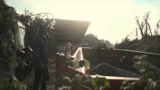 עץ השדה שמן זית ישראלי- מסיק 2015 גבעת עדה