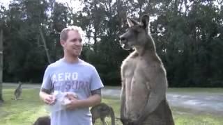 Nonton Man Feeds Buff Kangaroo Film Subtitle Indonesia Streaming Movie Download