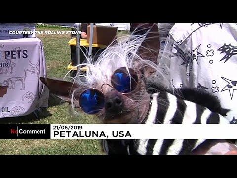 Kalifornien: Neunzehn hässliche Hunde stolz präsentie ...