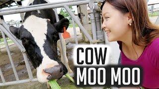 Taitung Taiwan  city photo : TAITUNG, TAIWAN TRAVEL VLOG: Feeding Cow Moo Moo!
