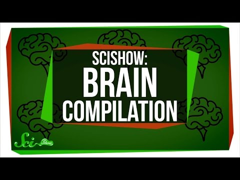 5 Things You Should Know About Your Brain