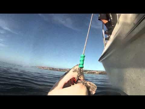 Salto di uno squalo