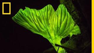 Glow-in-the-Dark Mushrooms: Nature's Night Lights