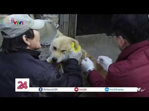 Chợ thịt chó lớn bậc nhất Hàn Quốc bị đóng cửa | VTV24