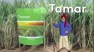 Video Tamar Marathi MP3, 3GP, MP4, WEBM, AVI, FLV Juni 2018