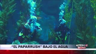 Aventura del Paparrush en el acuario de Long Beach – Noticias 62  - Thumbnail