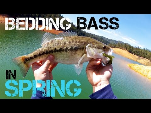 Bass Fishing- Bedding Bass in Spring