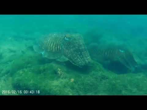 Scuba Diving in Nivati Vengurla Light House_Búvárkodás. Heti legjobbak