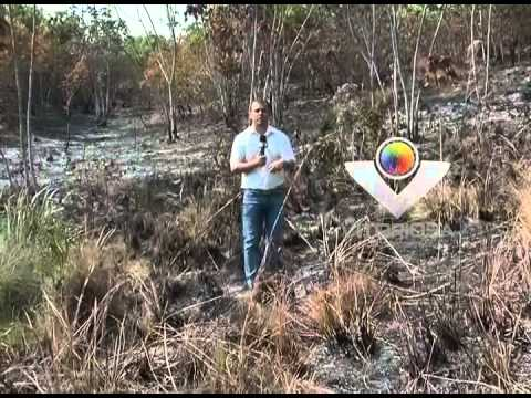 Incêndios em duas reservas comprometem pesquisas da UFU