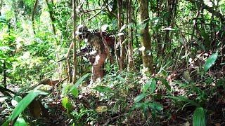 Video NEKAT..!! Berburu Sendirian Ke Hutan MP3, 3GP, MP4, WEBM, AVI, FLV Agustus 2018