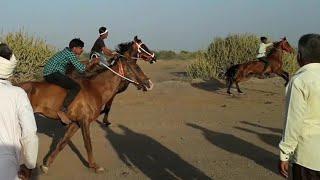 Video Horse Race in Serdi kutch 2018 : कच्छ की सबसे बड़ी घोड़ो की रेस MP3, 3GP, MP4, WEBM, AVI, FLV Mei 2018
