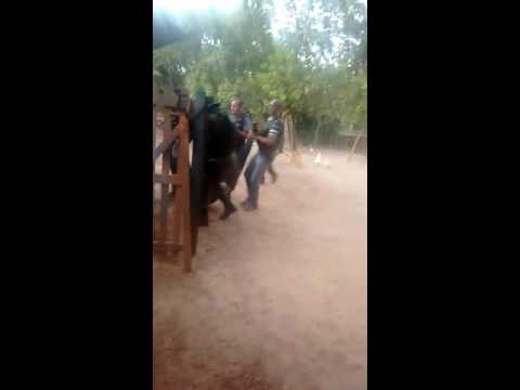 Polícia mata dois assaltantes de banco em Anajatub