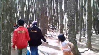 Wisata Alam yang indah, Hutan Pinus MANGUNAN, 30 km tenggara kota Yogyakarta