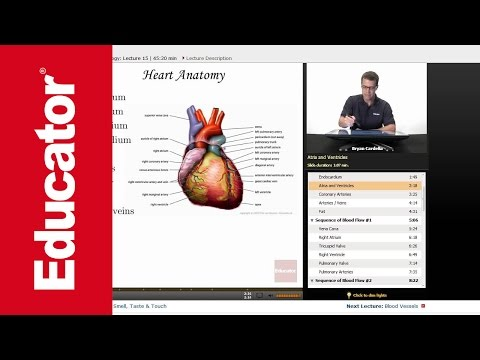 Search Results For Awesome Anatomy Of The Heart Youtube Mp3 Music