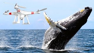 Video J'AI SURVOLÉ UNE BALEINE EN DRONE ! MP3, 3GP, MP4, WEBM, AVI, FLV September 2017