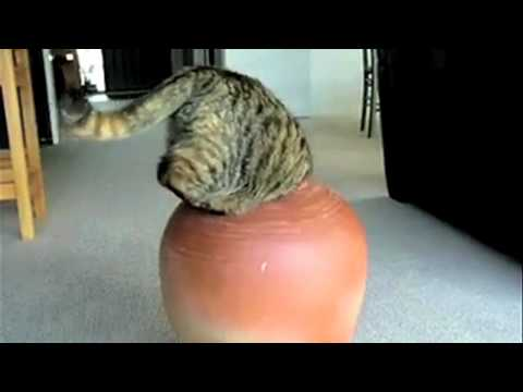Supercats: Episode 2 — More Hilarious Cat Videos!