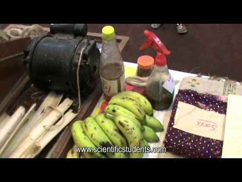 Value Added Products from Banana