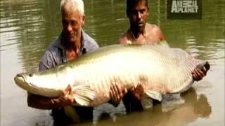 River Monsters - Battling an Arapaima
