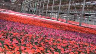 Portage (MI) United States  city images : Elzinga Hoeksema Greenhouses - Portage, MI