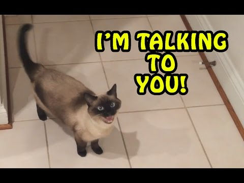 Cats Talking With Their Humans Compilation 2017 [NEW]