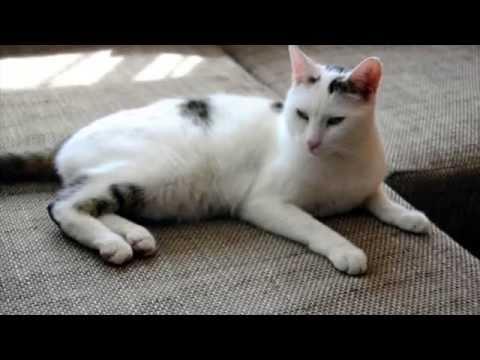 Magnetische Napfunterlagen für Katzen von printfarm24