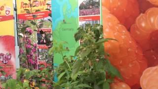 #188 Four Oaks Trade Show 2012 - Autumn Amber