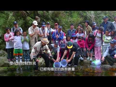 臺灣國寶魚 櫻花鉤吻鮭