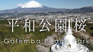 空撮 平和公園 仏舎利塔と富士山と桜 | Mt.Fuji from Gotemba Peace Pagoda