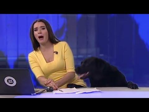 شاهد كلب اقتحم نشرة اخبار تلفزيونية